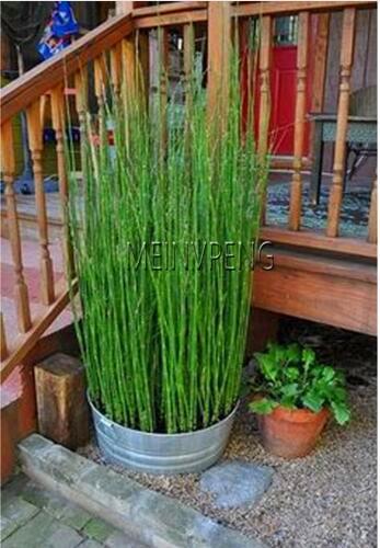Акция! 20 Мини moso карликовый бамбук в горшке bamboo садовое растение бонсай горшки для балкона подающий надежды ставка 90% DIY для дома сад план