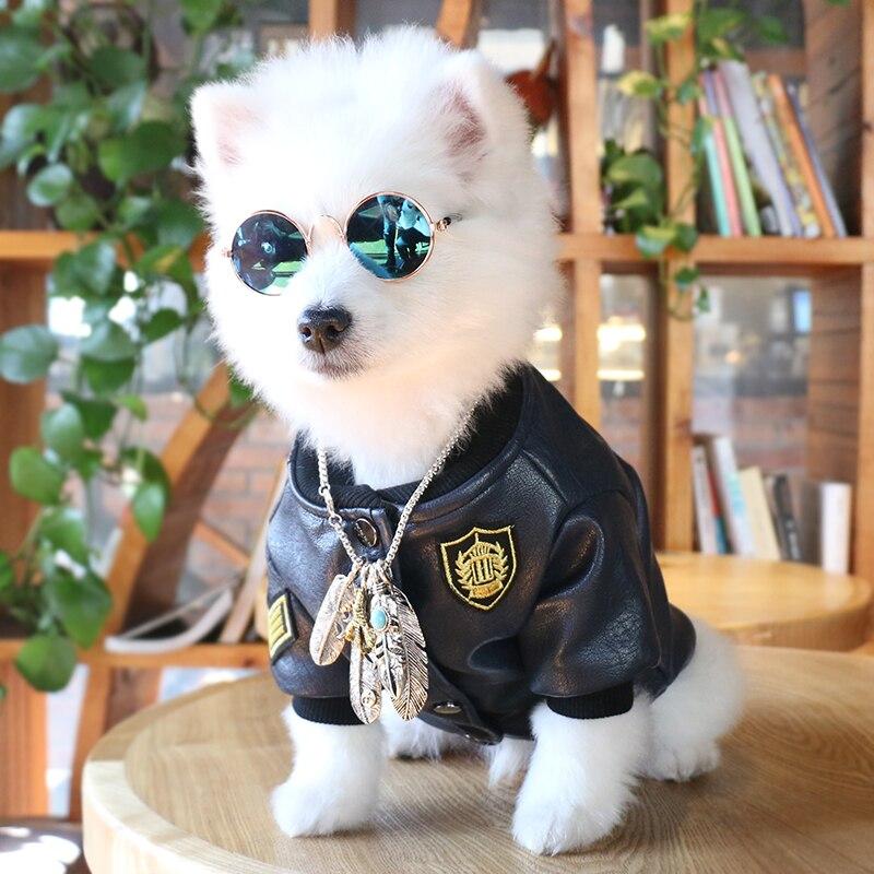Eyeglasses for dogs