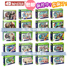 4d master puzzle Assembling toy Animal Dog cat Chicken Horse Shark Whale Biology organ anatomical model medical teaching model