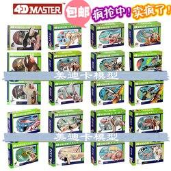 Rompecabezas maestro 4d, juguete de ensamblaje de animales, perro, gato, pollo, caballo, tiburón, ballena, órgano biológico, modelo médico anatómico, modelo de enseñanza