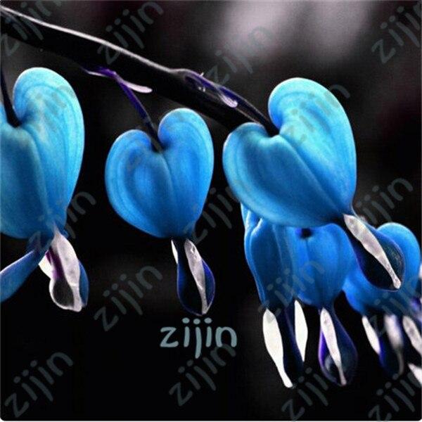 100 шт./пакет Dicentra Spectabilis дицентра классический коттедж, сад завод, в форме сердца цветы весной, редкая Орхидея бонсай