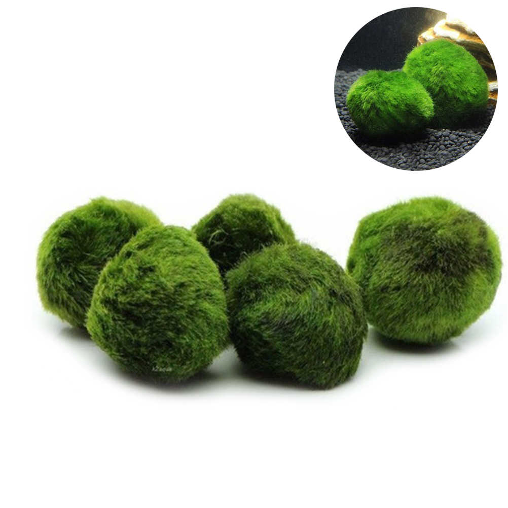 5pcs Marimo Moss Ball Aquarium Plants Terrarium Cladophora Ball Fish Tank Ornaments