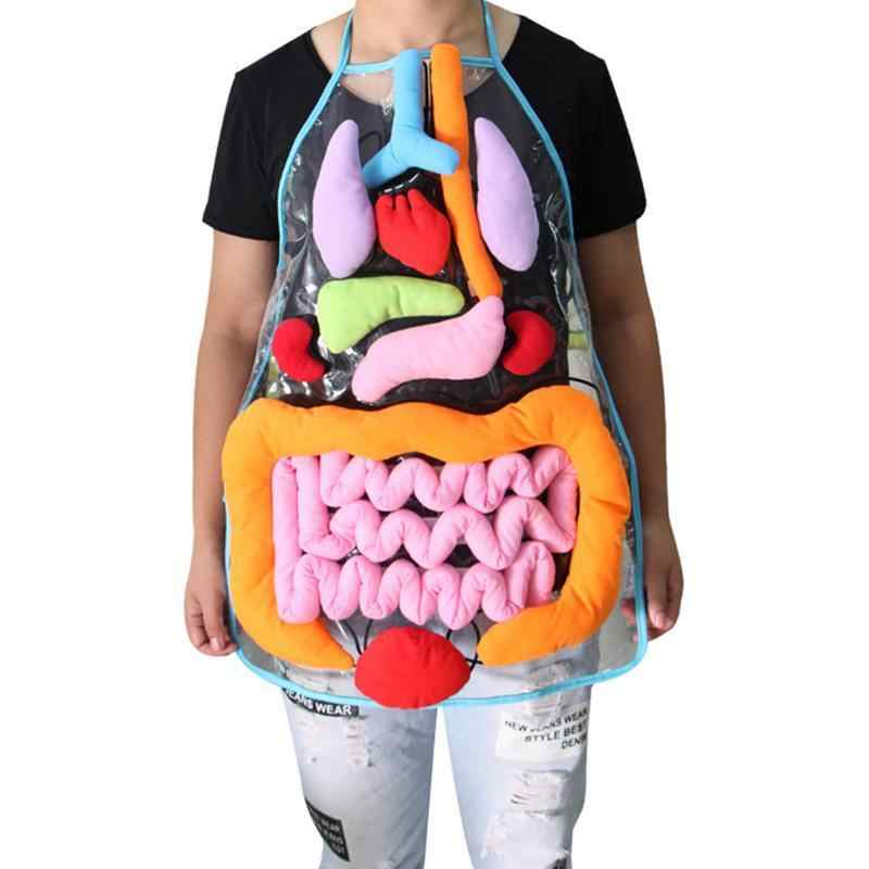 Insights Onluk Organlari Insan Vucudu Anatomisi Bilinc Okul Oncesi