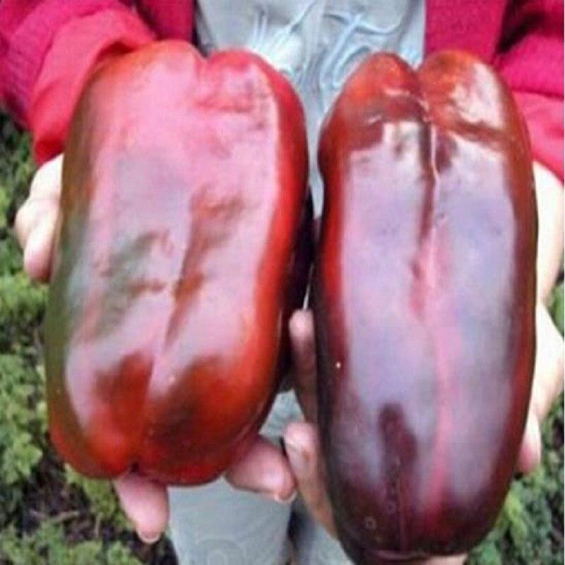 1 упак., 100 шт./упак., русский гигантский сладкий перец бонсаи, Органические Фамильные Красный Великан Чили # M384