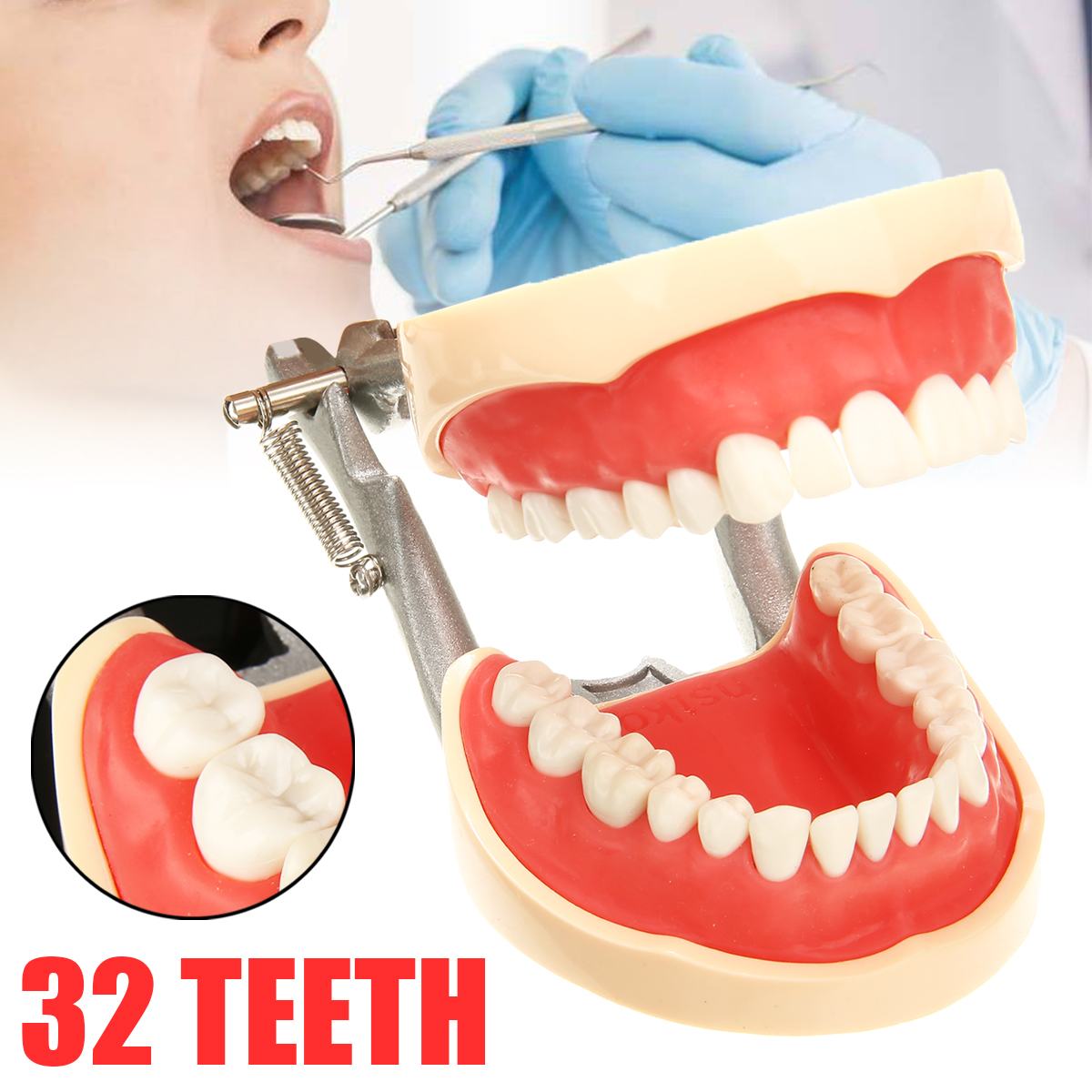 1 Set  screw-in Removable Teeth Dental Teaching Study Model Dental Typodont Model for Oral Medical Education1 Set  screw-in Removable Teeth Dental Teaching Study Model Dental Typodont Model for Oral Medical Education