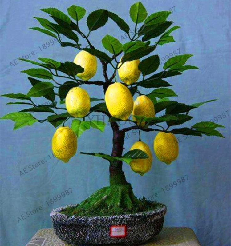 New 2018!20pcs Lemon Tree Plants Fruit Plantas Bonsai Plant DIY Home Garden  BONSAI Edible Green Lemon Floresling,#530GVS
