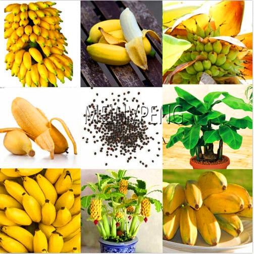 Genuine!Dwarf Banana Tree bonsai Fruit plant Rare Mini Bonsai Musa Velutina Sementes da Fruta 100 Pcs Free Shipping,#VPNJ0C