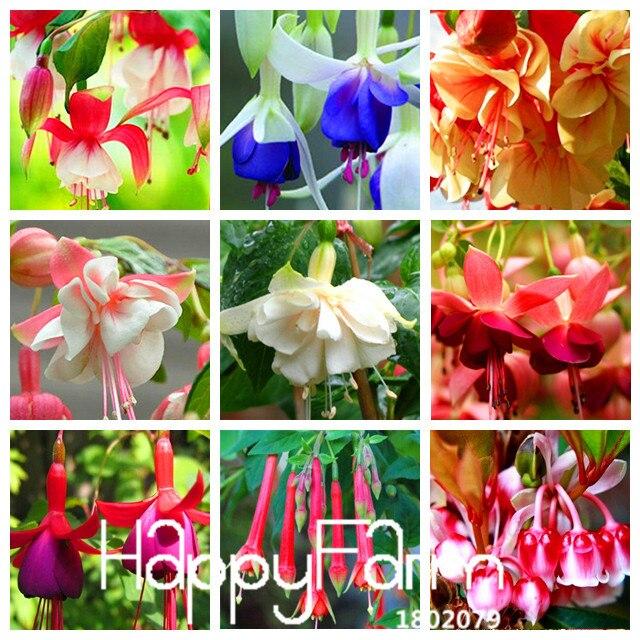 Скидка! 100 шт./лот/партия, Уникальные красные цвета фуксии, Многолетние цветы бонсай, цветы в горшечных горшках, цветы для самостоятельной посадки, многоцветные, #43