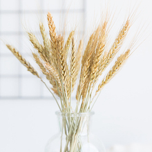 Pure Natural Wheat Dried Flower Bouquet Barley Living Room Decoration Simulation Home Plant