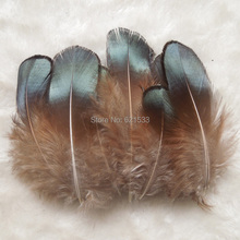 1000pcs/Lot 5-8CM Green Bronze Lady Amherst Pheasant Plumage Feathers,Cheap Feathers for DIY,Jewelry Making etc