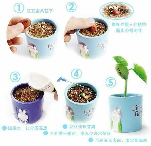 5 PCS Magic ปลูกข้อความถั่ว Bonsais Magic Bean ภาษาอังกฤษ Magic Bean Potted สีเขียว Office Home Decor สำหรับดอกไม้หม้อ planter