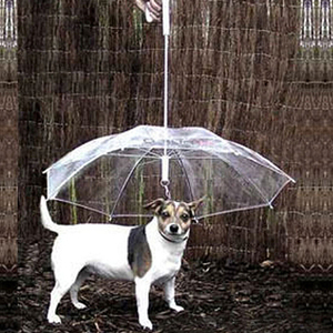 Image 3 - כלב הליכה עמיד למים ברור כיסוי מובנה רצועה גשם מעורב בשלג שלג מטריית חיות מחמד מוצרים לחיות מחמד חדש