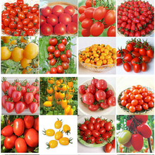 200pcs 24 Kinds Tomoto bonsai Mixed Packed Purple Black Red Yellow Green Cherry Peach Pear Tomato Organic Food For Garden