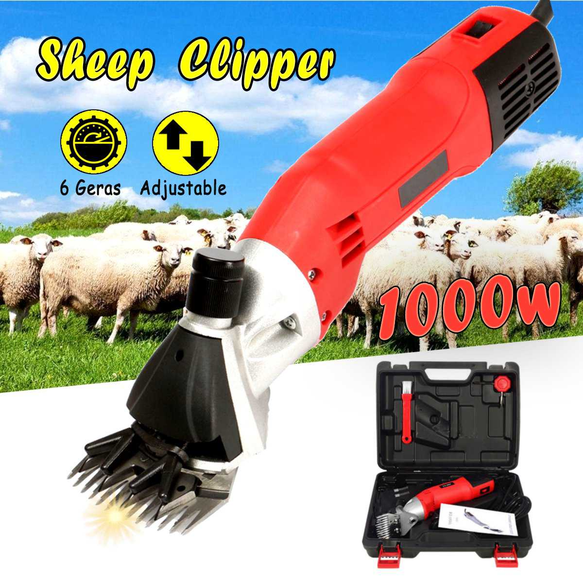 best sheep and goat exporter ideas and get free shipping