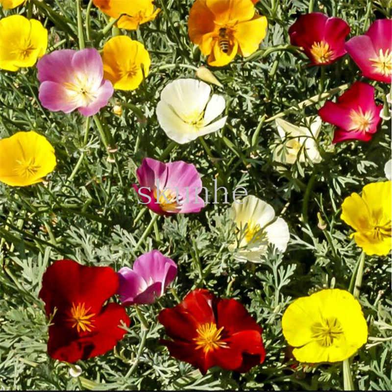 カリフォルニアポピー盆栽カリフォルニアコーンポピー盆栽風景花盆栽ガーデングリーン植栽の花 100 ピース (華玲曹操)