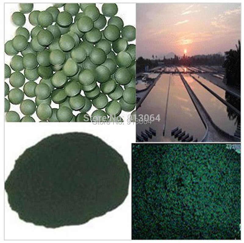 Qualité d'exportation 0.25g/pilule organique spiruline riche en vitamine Anti-fatigue Anti-rayonnement naturel pour minceur matière première