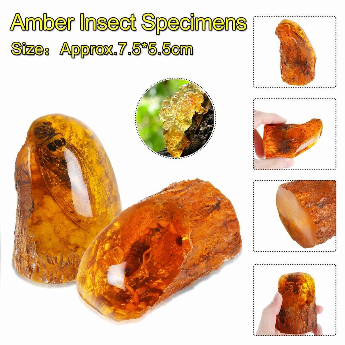 Amber Insects Scorpion Samples Stones Crystal Specimens Imitations Healing Home Decorations Collection