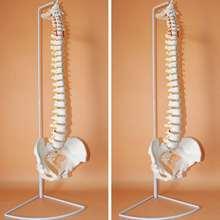 73 см в натуральную величину Гибкая Мануальная модель анатомической анатомии позвоночника человека с подставкой школьная медицинская образовательная модель