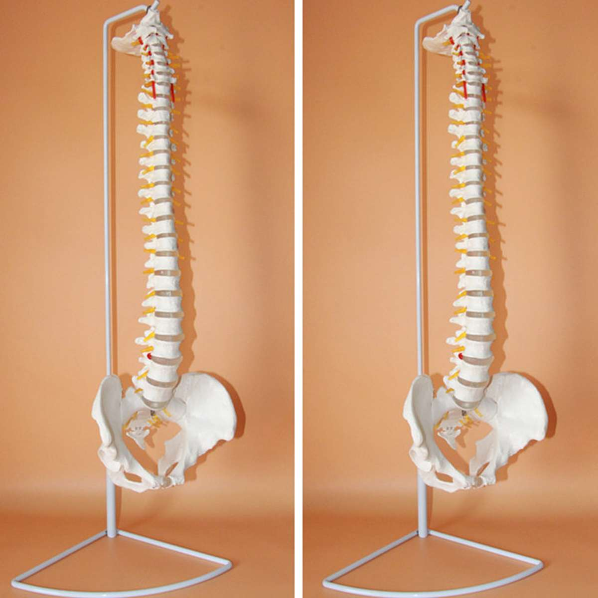 73 cm Vita Formato Flessibile Chiropratica Umani Della Colonna Vertebrale Anatomia Anatomico Modello Con Il Basamento Scuola di Scienza Medica Modello Educativo