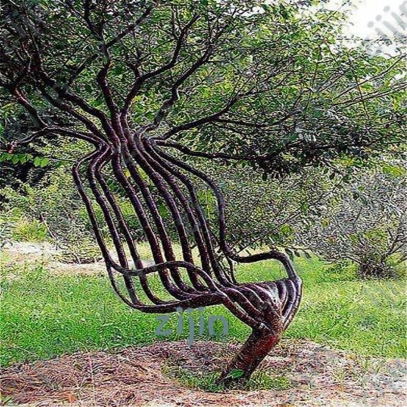 Peças Raras 40 Cadeira de Jardim Árvore Decoração Da Árvore de bonsai Para Casa Jardim bonsai Plantas Ornamentais Ao Ar Livre