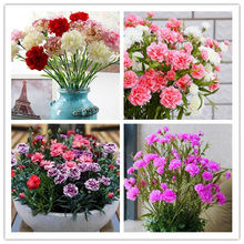 100 PCS/Bag Carnation flower flores,Best gift to mother,Beautiful and fragrant, bonsai flower plantas plant DIY home garden(China)