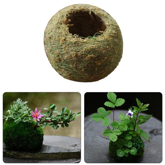 Us 1 36 46 Off Aliexpress Com Buy Moss Ball Personality Small Flower Pots With Plants To Make Moss Bonsai Home Garden Decoration Durable And