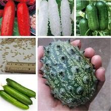 Big Promotion!! 20Pcs Mini Cucumber Bonsai Rare Non-GMO Delicious Fruit & Vegetable Plant for Home Garden Planting