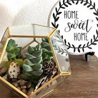 Tabletop Display Succulent Fern Moss Flower Pot Air Plant Planter Box Fairy Garden Polyhedron Glass Geometric Terrarium Bonsai