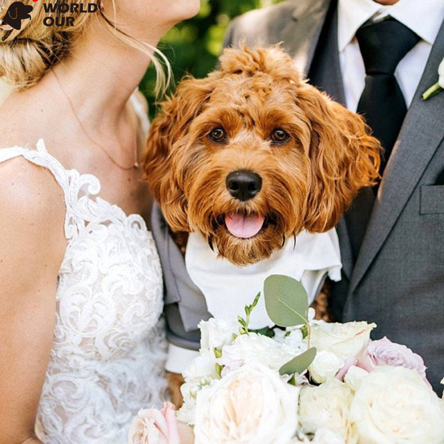Dogs Wedding Suit Style Jacket