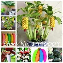 100 шт. банан бонсай, разных цветов карлик фруктовых деревьев, вкус молока, открытый многолетние фрукты дерево цветок бонсай садовое насаждение