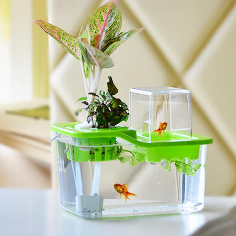 Aquarium eau plante herbe poisson réservoir légumes symbiotique bureau pratique poisson écologique aménagement paysager Aquarium pousse des plantes