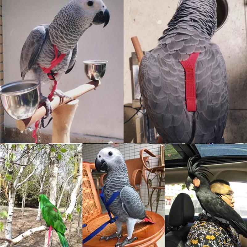 Parrot Bird Leash Anti-bite Flying Training Rope Parrot Bird Pet Leash Kits Ultralight Harness Leash Soft Portable Pet Plaything