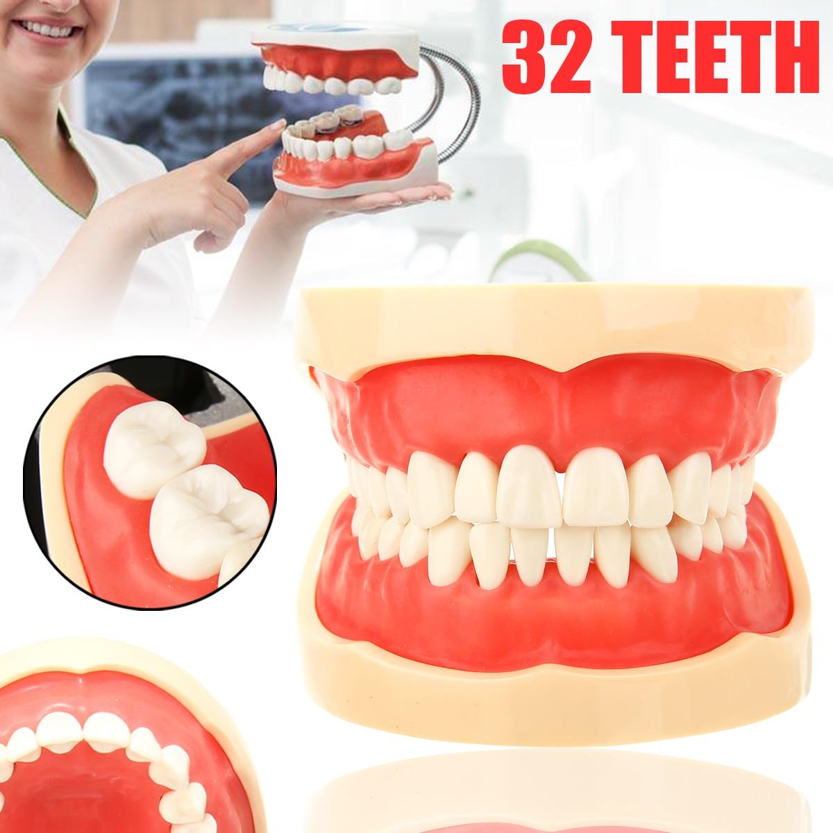 1 Set Dentaire Typodont Modèle avec 32 pièces à visser Amovible Dents D'enseignement Dentaire Modèle D'étude pour Oral Formation Médicale