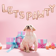 9PCS 16 Creative Pet Dog Birthday Party Decoration Foil Balloon Cute Letter Decor For
