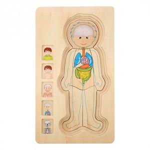 Image 5 - أطفال خشبية لغز لعب هيكل جسم الإنسان متعدد الطبقات لعبة الطوب الطفل التعليم المبكر ذكي التعلم الإدراك لعبة