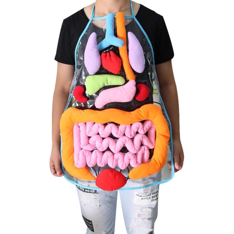 Educación ideas juguetes para los niños anatomía delantal órganos del cuerpo humano conciencia ciencia preescolar casa la enseñanza SIDA