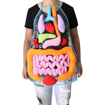 Educatief Inzichten Speelgoed Voor Kinderen Anatomie Schort Menselijk Lichaam Organen Awareness Voorschoolse Wetenschap Home School Leermiddelen