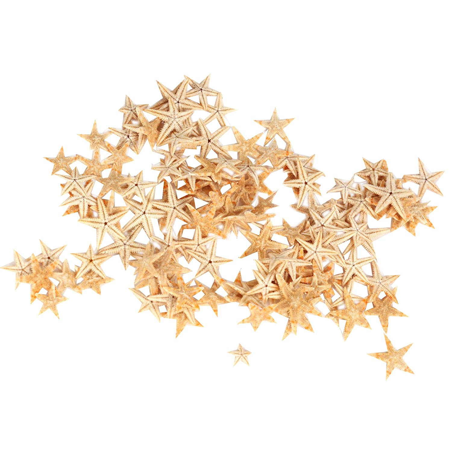 Small Starfish Star Sea Shell Beach Craft 0.4 Inch-1.2 Inch 90 Pcs