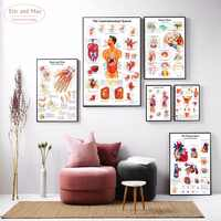 Anatomia Do Corpo humano Impressão Da Arte Da Lona Parede Pintura Poster Pictures Para Casa Decorativa Decor No Frame Imagem do Hospital
