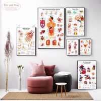 Corpo umano Anatomia della Tela di canapa di Arte Della Pittura di Stampa Poster Da Parete Immagini Per La Casa Decorativo Ospedale Decor Nessuna Cornice