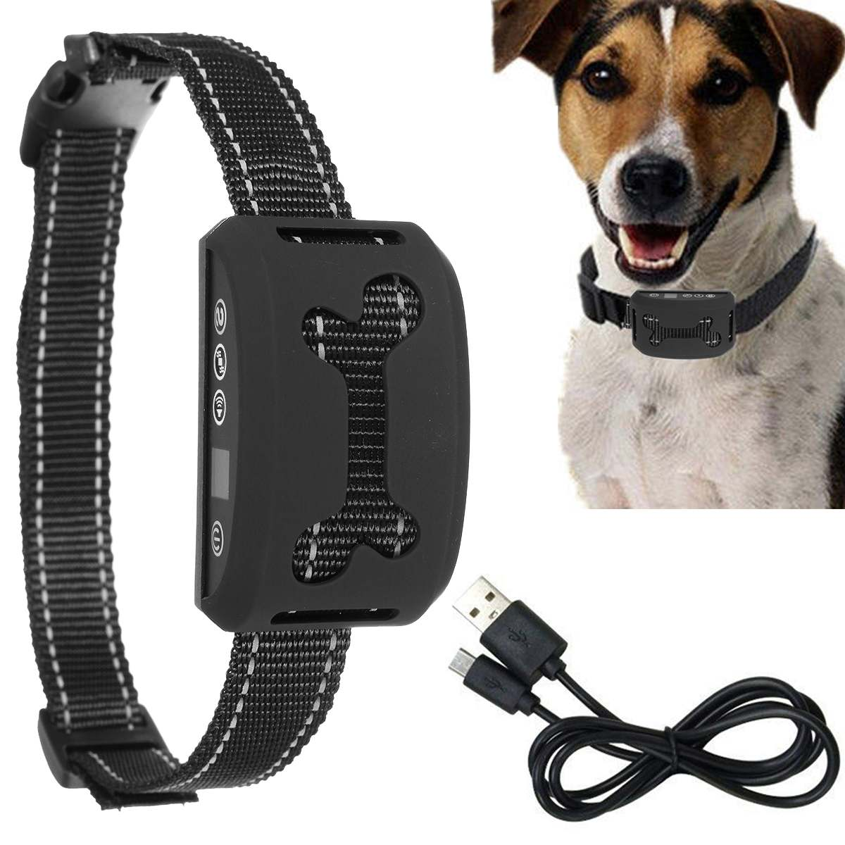 Dog Collars and Leashes for Dog Training