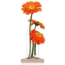 Ваза для цветов, стеклянные трубки, прозрачный стеклянный цветочный горшок с деревянной подставкой для гидропонных растений, тестовые тюбики, контейнер, декор для домашнего стола