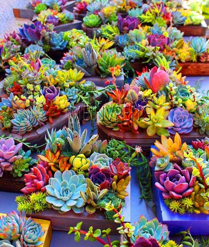 Nuevo Bonsai 2018! 100 Uds. Increíbles Plantas de Sempervivum Mixed Mini cactus suculento Plantas perennes casa puerros Live Forev