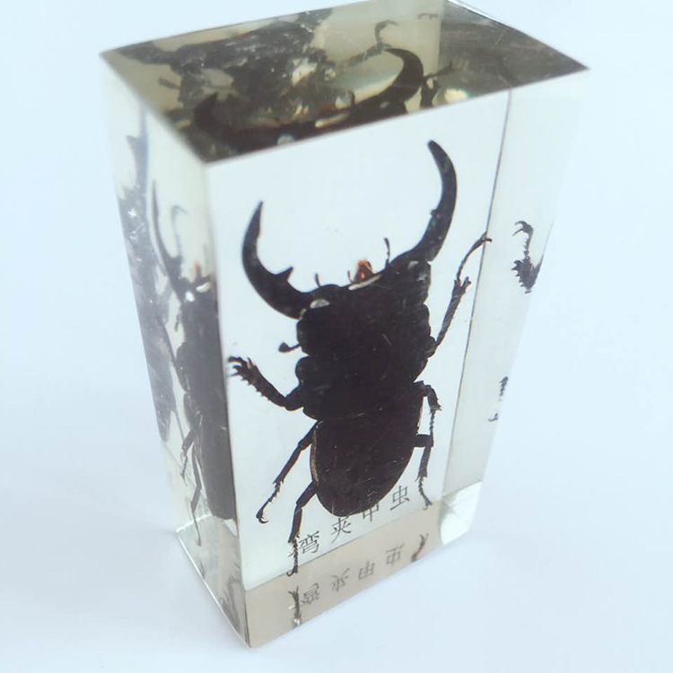 Insect Embedding Specimens Real Beetle Weevil Cockroach Specimen Model Biological Entomology Teaching Aids Resin Craftwork