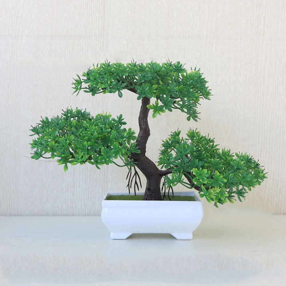 Bonsai Tree Large Chinese Elm 40-45cmTall Gift Set
