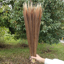 Beautiful 10pcs 20 22 inches/50 55 cm Natural Golden Pheasant Tail Feathers For Wedding Christmas Home Craft New Year decoration