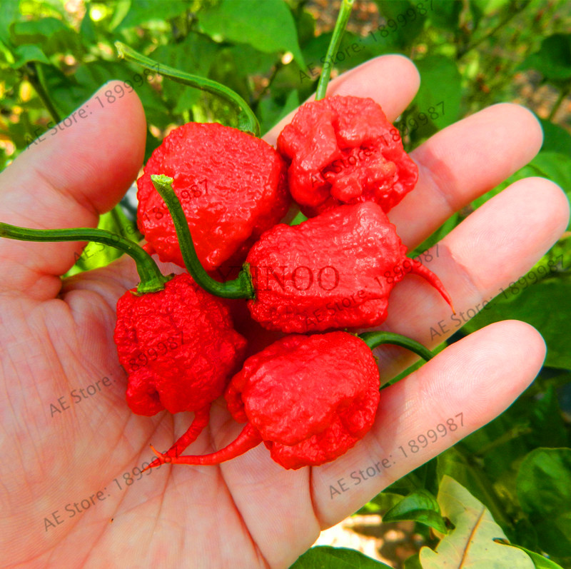 Promotion!200 Vegetable Fruit Pepper Garden, Giant Chili Plantas   Sweet Pepper   Carolina Reaper