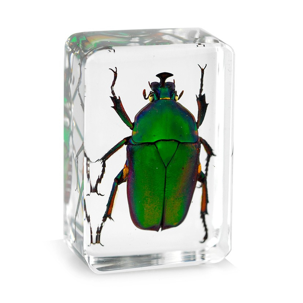 4.5x3x2cm Transparent Insect Specimen Rose Chafer Beetle Animal Insect Display Specimen Educational Supply Biological Collection