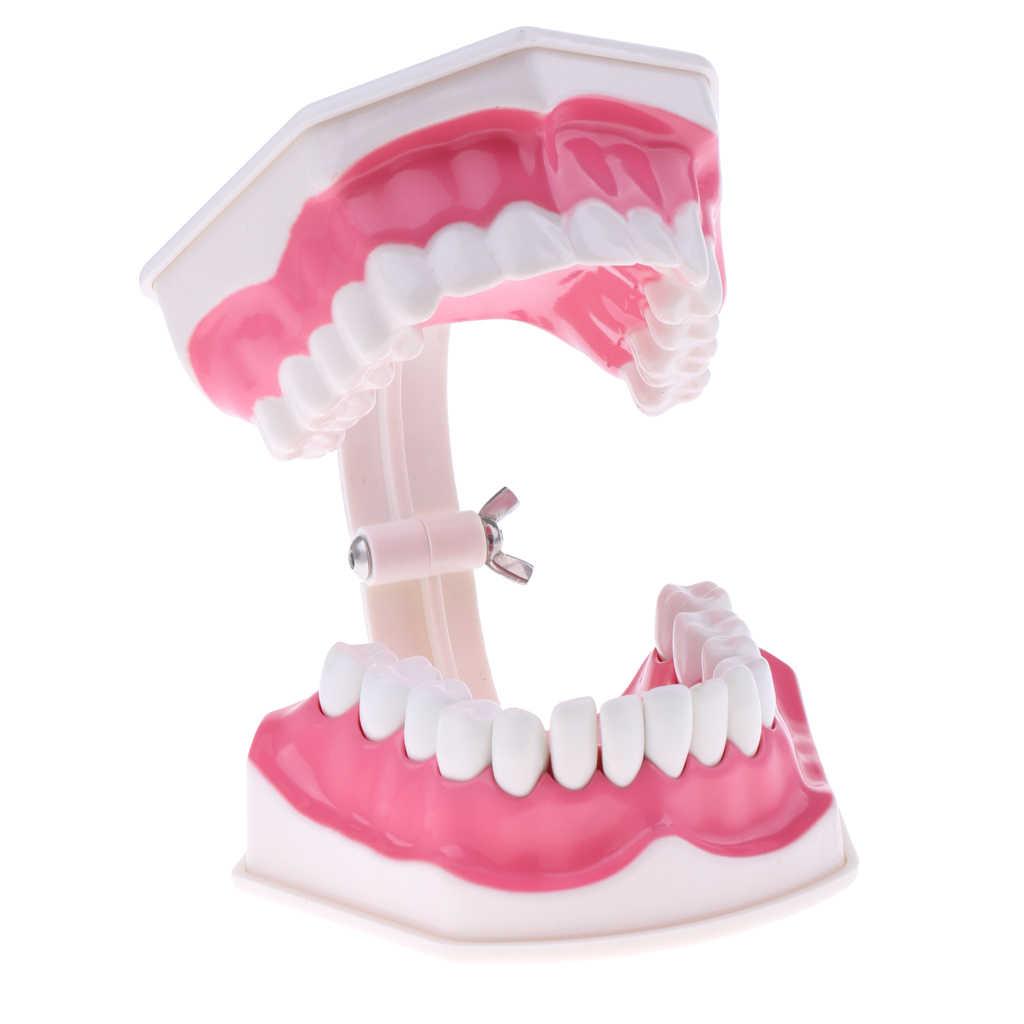 2X materiał PVC duży Model zębów ludzkich ze szczoteczką do zębów dentysta Classroom Lab narzędzia dydaktyczne Student edukacyjne zabawki
