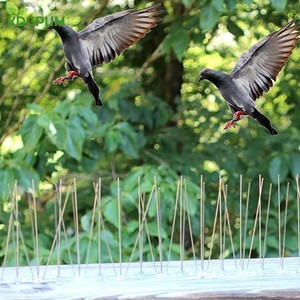 Image 3 - מכירה לוהטת 6 m פלסטיק ציפור ויונה קוצים אנטי ציפור אנטי יונה ספייק עבור להיפטר של יונים להפחיד ציפורים הדברה